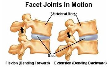 Facet_joints_in_motion