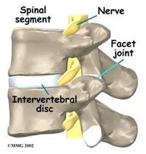 stiff_spinal_segment